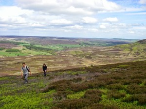 On the way up Arden Great Moor, looking north. Colourful!
